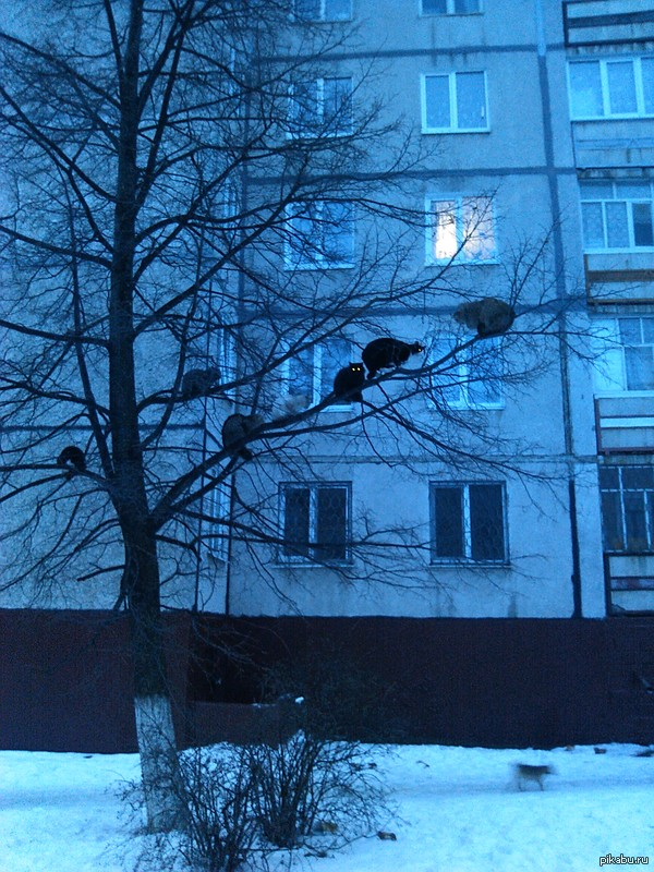 http://s6.pikabu.ru/post_img/2014/02/27/4/1393475930_1586590474.jpg