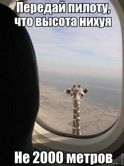 жираф на аве: