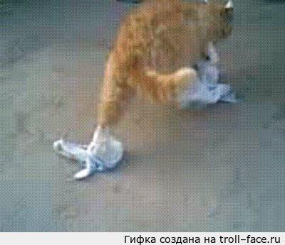 Картинка кот недовольный