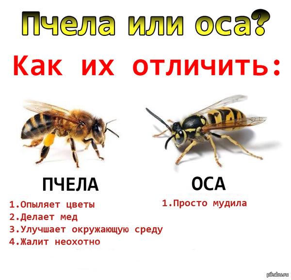 1399964669_1200745924.jpg