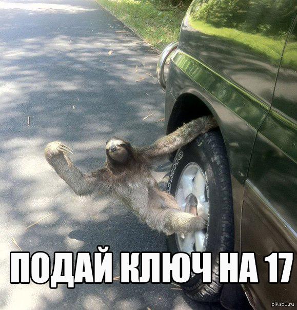 """Работник месяца в автосервисе """"заходи за машиной через пару лет""""  ленивец, лига Лени, автосервис, машина"""