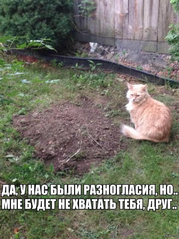 """Прослезился.. """"Похоронил пса, спустя пару часов увидел своего кота рядом с его могилкой..""""  кот, пес"""