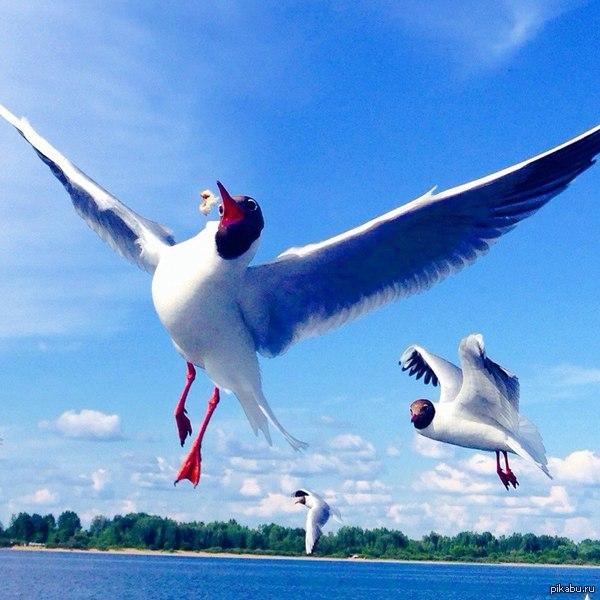 Неожиданно Решил покормить чаек,а моя девушка это сфотографировала)  Нижний Новгород, чайки, хлебушек