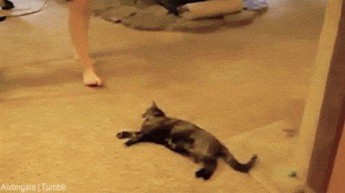 валит боком   кот, нога, охота, гифка