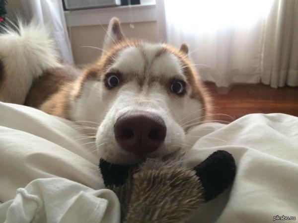 Сегодня я сказал своей собаке, что она приемная   собака, Картинки и фото, собаки лучше кошек