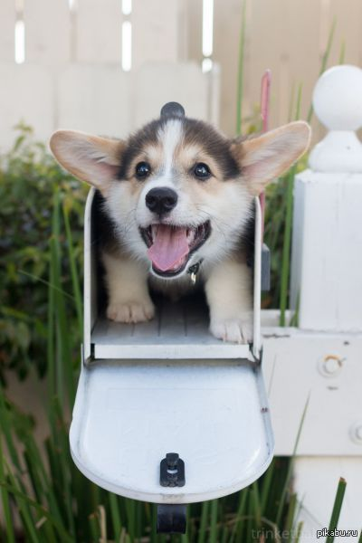 Привееет!!!)))   фото, позитив, щенок