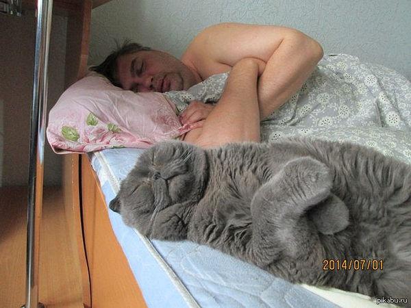 """""""Дружно спят мой муж и кот ))"""" Синхронный сон  сон, кот, не моё"""