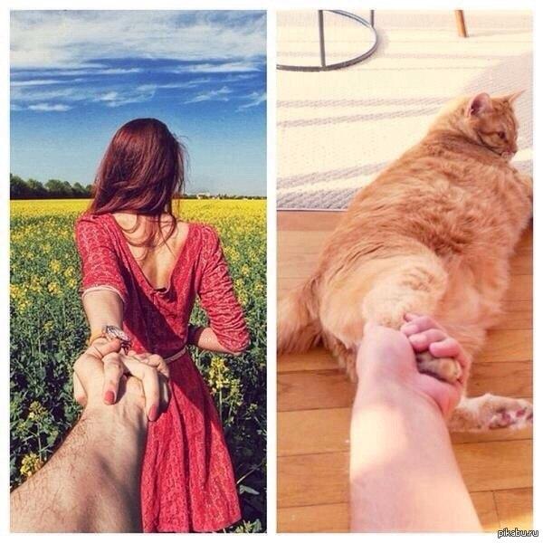 Куда ты меня тащишь с*ка двуногая :D кошачья версия :)  кот, следуй за мной, Картинка