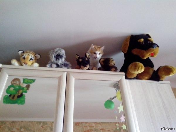 """Игра называется """"найди котика"""" играть могут только те, кто любит котиков)))  кот, питомец, мурчало, усы и хвост"""