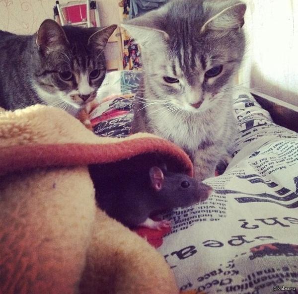 Неловкая ситуация   кот, охота