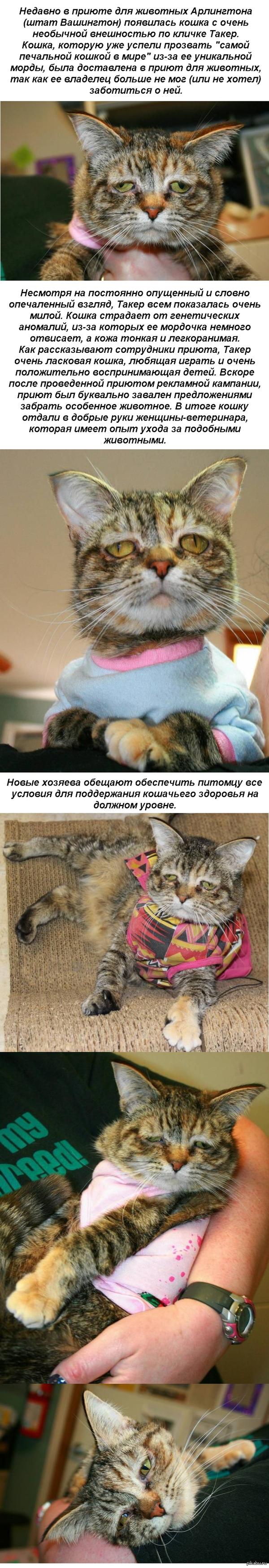 Самая печальная кошка нашла себе новых хозяев   кот, печаль, приют, хозяева, длиннопост