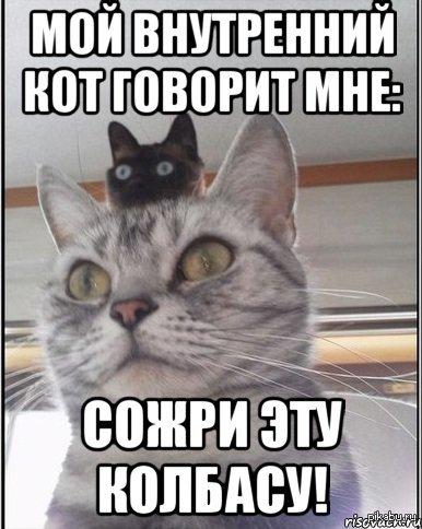 Внутренний кот   внутренний кот, забавно, сожрать колбасу