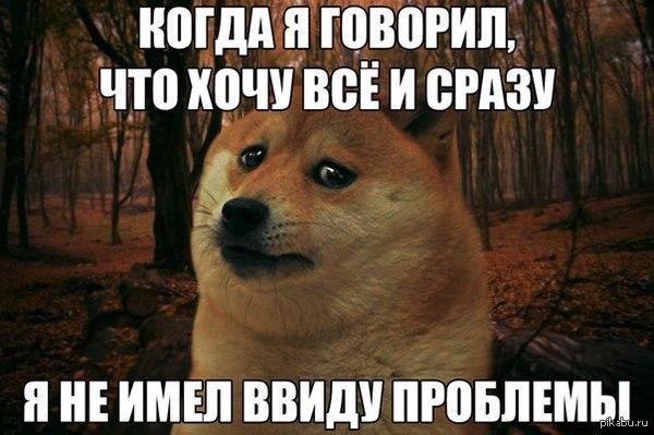 Однако, прав пёсян ! пёс, проблема, всё и сразу, уотакуот