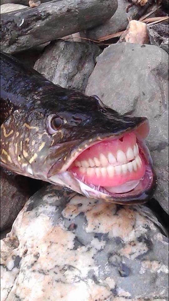 приколы про рыбалку сом
