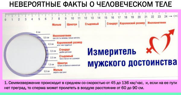 kakie-devushkam-nravyatsya-chleni