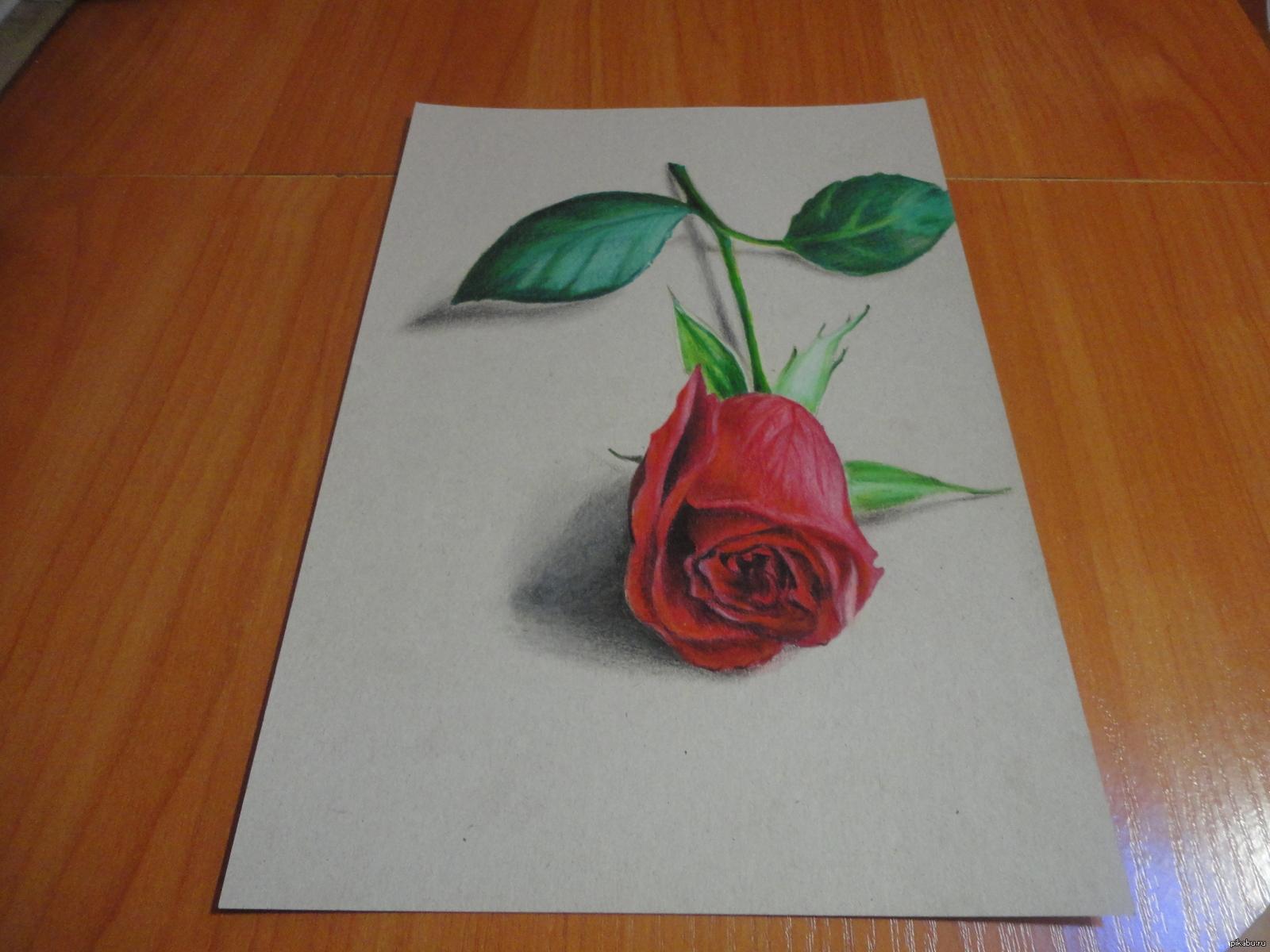 Пошаговое фото рисования розы