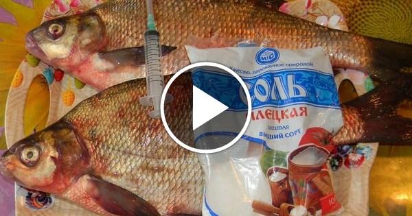 Засолка речной рыбы в домашних условиях